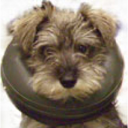 Comfy Collar - Inflatable buster collar - Extra Large