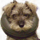 Comfy Collar - Inflatable buster collar - Small
