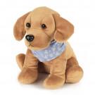 intelex cozy pets labrador